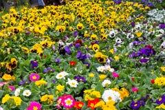 Un fond des fleurs colorées de ressort image stock
