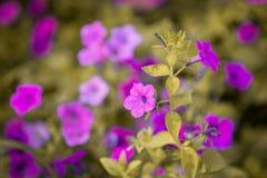 Un fond gentil de fleur photos stock