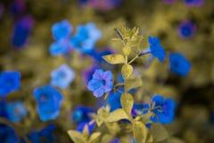 Un fond gentil de fleur photographie stock libre de droits