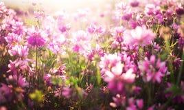 Un fondo de la flor Imagen de archivo