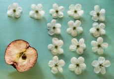 Un fondo de la turquesa con las flores blancas de la manzana y una mitad de una manzana roja Foto de archivo libre de regalías