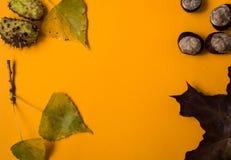 Un fondo di carta arancio con stile di autunno delle castagne e delle foglie fotografie stock libere da diritti