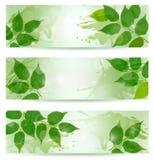 Un fondo di tre nature con le foglie verdi della sorgente Fotografie Stock Libere da Diritti