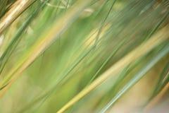 Un fondo natural abstracto de hierbas imágenes de archivo libres de regalías