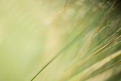 Un fondo natural abstracto de hierbas imagen de archivo libre de regalías