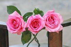 Un fondo rosa di tre rose immagine stock libera da diritti