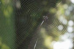 Un fondo vacío del concepto del web de araña Imágenes de archivo libres de regalías