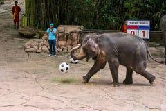 Un football de jeu d'éléphant Photographie stock libre de droits