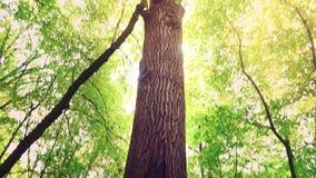 Un foro nell'albero sotto forma di un organo riproduttivo femminile Una grande cavità nel tronco di un albero in mezzo alla a video d archivio