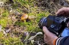 Un fotógrafo Shooting Macro Scene al aire libre Manos que sostienen una cámara digital en Live Preview Mode Pointing en una seta  imagenes de archivo