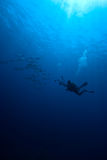 Un fotógrafo subacuático Fotos de archivo