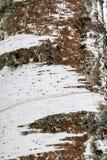 Un fragment d'écorce de bouleau Image libre de droits