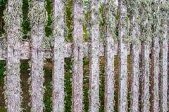 Un fragment d'une barrière en bois, couvert de lichen Fond images libres de droits