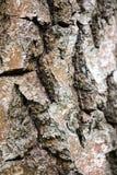 Un fragmento de la corteza de abedul vieja con las grietas profundas Fotografía de archivo libre de regalías