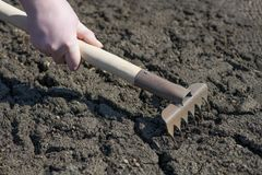 Un frammento della mano di una lavoratrice agricola, che tiene un rastrello ed allenta la terra incrinata fotografia stock libera da diritti