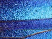 Un frammento di un'ala della farfalla blu di morpho, alto ingrandimento Fotografia Stock Libera da Diritti