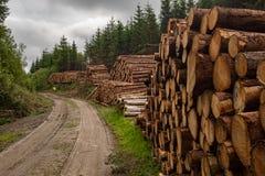 Un frente en vista de una pila de árboles recientemente cortados rayados de ramas y preparados para la pieza de la serrería de la imagen de archivo libre de regalías