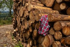 Un frente en vista de una pila de árboles recientemente cortados rayados de ramas y preparados para la pieza de la serrería de la foto de archivo libre de regalías