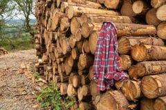 Un frente en vista de una pila de árboles recientemente cortados rayados de ramas y preparados para la pieza de la serrería de la fotografía de archivo