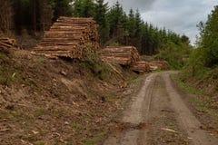 Un frente en vista de una pila de árboles recientemente cortados rayados de ramas y preparados para la pieza de la serrería de la imagenes de archivo