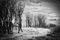 Un froid et un Gray Snowy et un Frosty Day dans les montagnes d'hiver Image stock