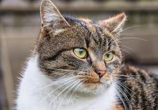 Un fronte molto crudele dei kittenche guarda alcuni uccelli in lontano e che pensa alla sua vita Ente variopinto immagini stock libere da diritti