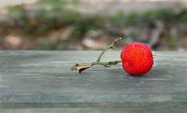 Un fruit sauvage rouge Images libres de droits