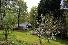 Un frutteto con un certo fiore sugli alberi e nei precedenti una casa bianca può essere visto fotografia stock libera da diritti