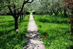Un frutteto con gli alberi da frutto in primavera Fotografia Stock