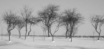 Un frutteto del ` s di pieno inverno Fotografia Stock Libera da Diritti