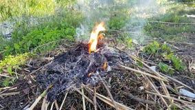 Un fuego quema en el jardín almacen de metraje de vídeo