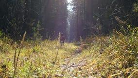 Un funcionamiento de la niña y del perro a lo largo de una trayectoria iluminada por el sol en el bosque del otoño almacen de video