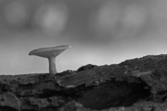 Un fungo minuscolo fotografie stock libere da diritti