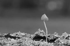 Un fungo minuscolo fotografia stock libera da diritti