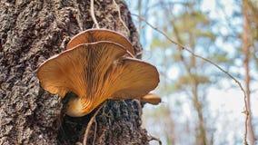 un fungo sull'albero immagini stock libere da diritti