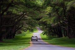Un funzionamento dell'automobile sul viale nel Tollymore Forest Park Fotografie Stock Libere da Diritti