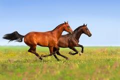 Un funzionamento di due cavalli fotografia stock