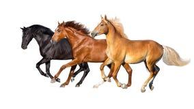 Un funzionamento di tre cavalli isolato immagini stock