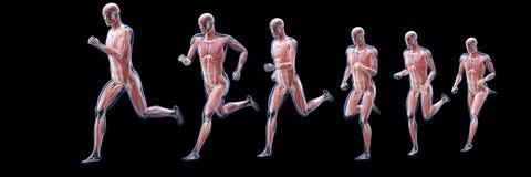 Un funzionamento equipaggia i muscoli illustrazione di stock