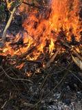 Un fuoco di accampamento Fotografia Stock