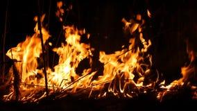 Un fuoco selvaggio pericoloso terribile alla notte in un campo Erba asciutta bruciante della paglia Un'ampia area della natura in archivi video