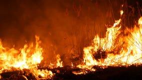 Un fuoco selvaggio pericoloso terribile alla notte in un campo Erba asciutta bruciante della paglia Un'ampia area della natura in stock footage