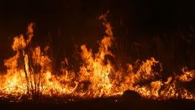 Un fuoco selvaggio pericoloso terribile alla notte in un campo Erba asciutta bruciante della paglia Un'ampia area della natura in video d archivio