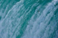 Un gabbiano che sale vicino al cascate del Niagara Immagine Stock