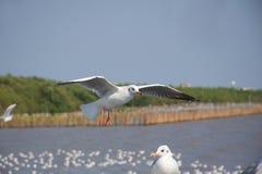Un gabbiano che sorvola altro alla costa di mare fotografia stock libera da diritti