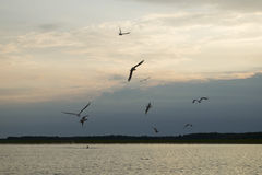 Un gabbiano che sorvola il lago Fotografia Stock Libera da Diritti