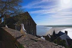 Un gabbiano di due bianchi che sta su una parete di pietra Alta marea vicino all'abbazia antica di Mont Saint-Michel ai precedent Immagini Stock