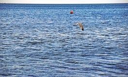 Un gabbiano di mare che sorvola il mare fotografia stock libera da diritti