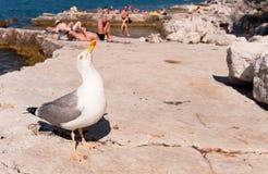 Un gabbiano sulla spiaggia ammucchiata immagini stock libere da diritti
