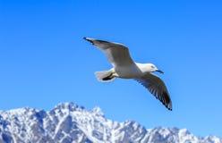 Un gabbiano volante sopra la montagna Fotografia Stock